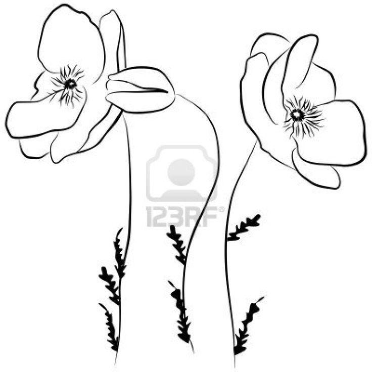 736x736 Drawn Poppy Flamboyant Flower