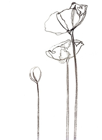352x480 Image Result For California Poppy Line Drawing Ink.