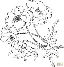 220x229 8 Best Poppies Images On Adult Coloring, Colouring