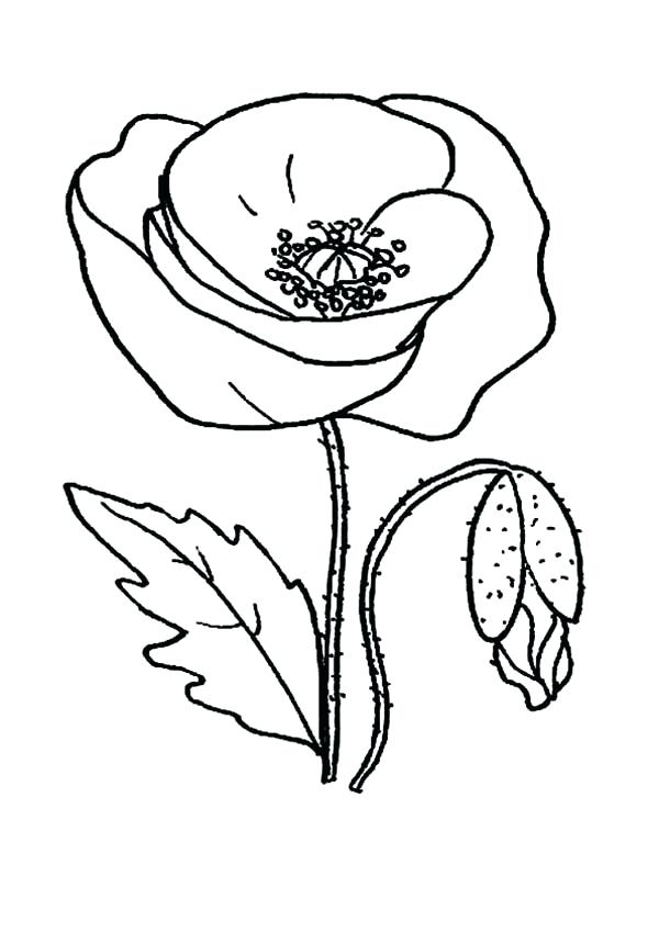 600x849 Poppy Coloring Page California Poppy Coloring Page