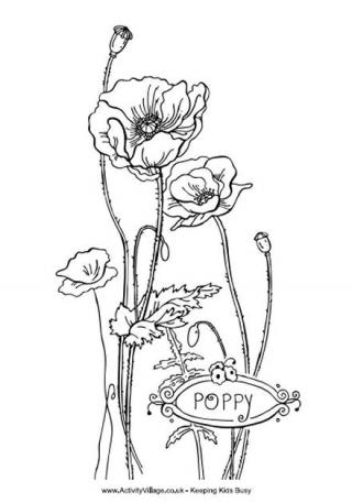 320x457 Poppy Colouring Page 3