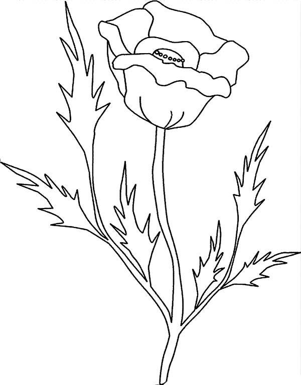 600x768 Poppy Leaves Drawing