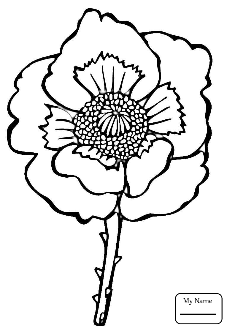 765x1111 Flowers Oriental Poppy Coloring Pages