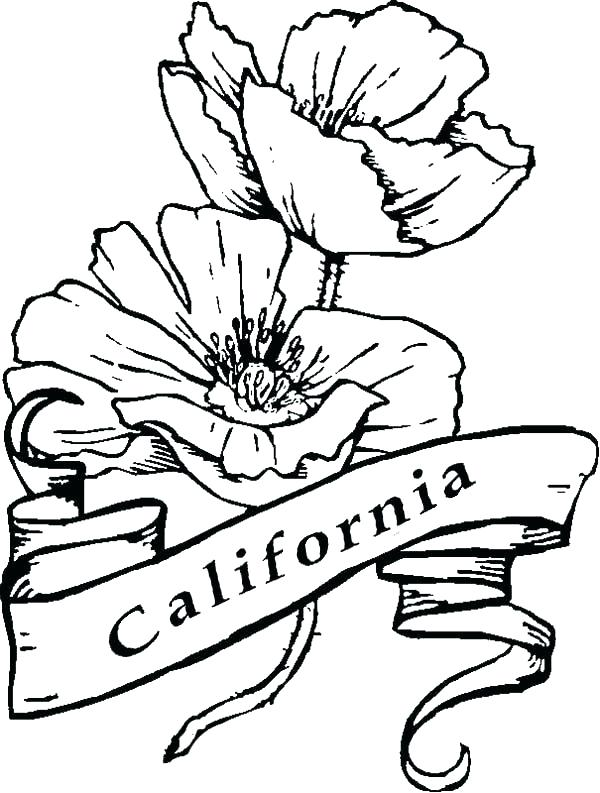 600x793 Poppy Coloring Page