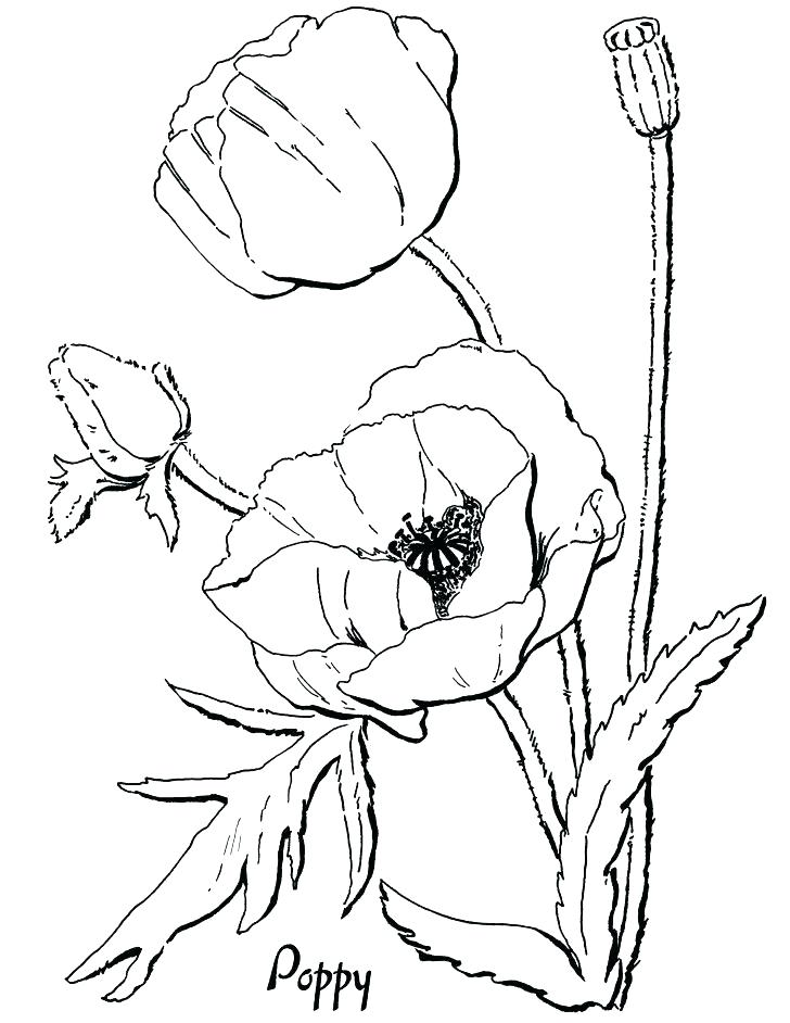 728x942 Poppy Coloring Pages