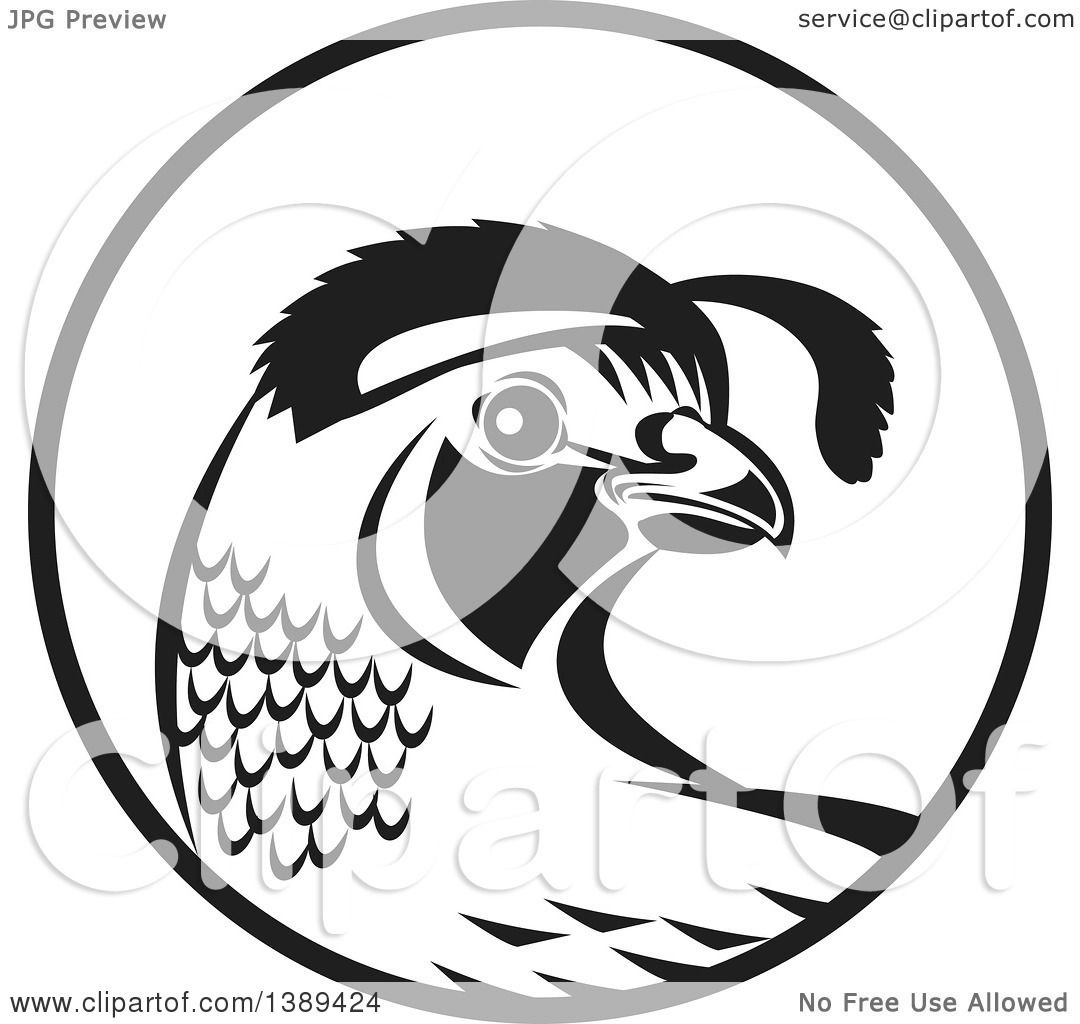 california quail drawing at getdrawings com free for personal use