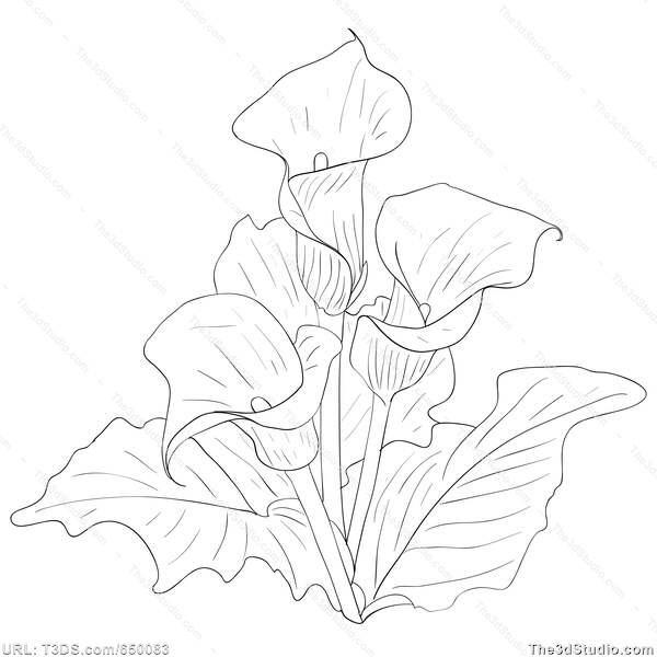 600x600 Calla Lily Bouquet Drawing Calla Lily Dra. Painting And Drawing