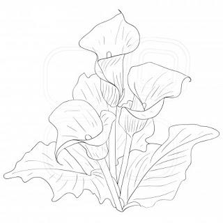Calla Lily Drawing At Getdrawings Free Download