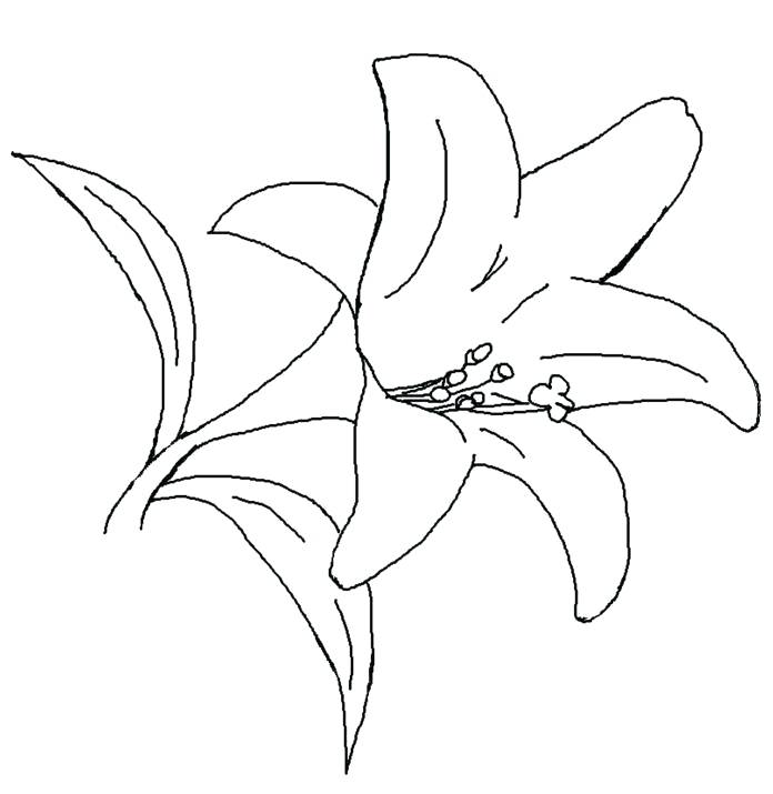 696x715 Calla Lily Coloring Pages Leivancarvalho Colouring Sheets 36176