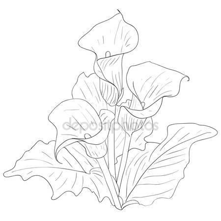 450x450 Calla Stock Vectors, Royalty Free Calla Illustrations