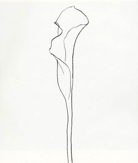 475x561 Drawn From Nature The Plant Lithographs Of Ellsworth Kelly