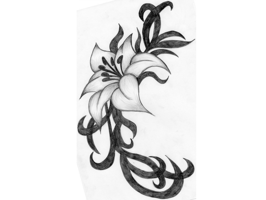 1024x768 Black White Pencil Drawings Of Flowers Calla Lilies Lilies