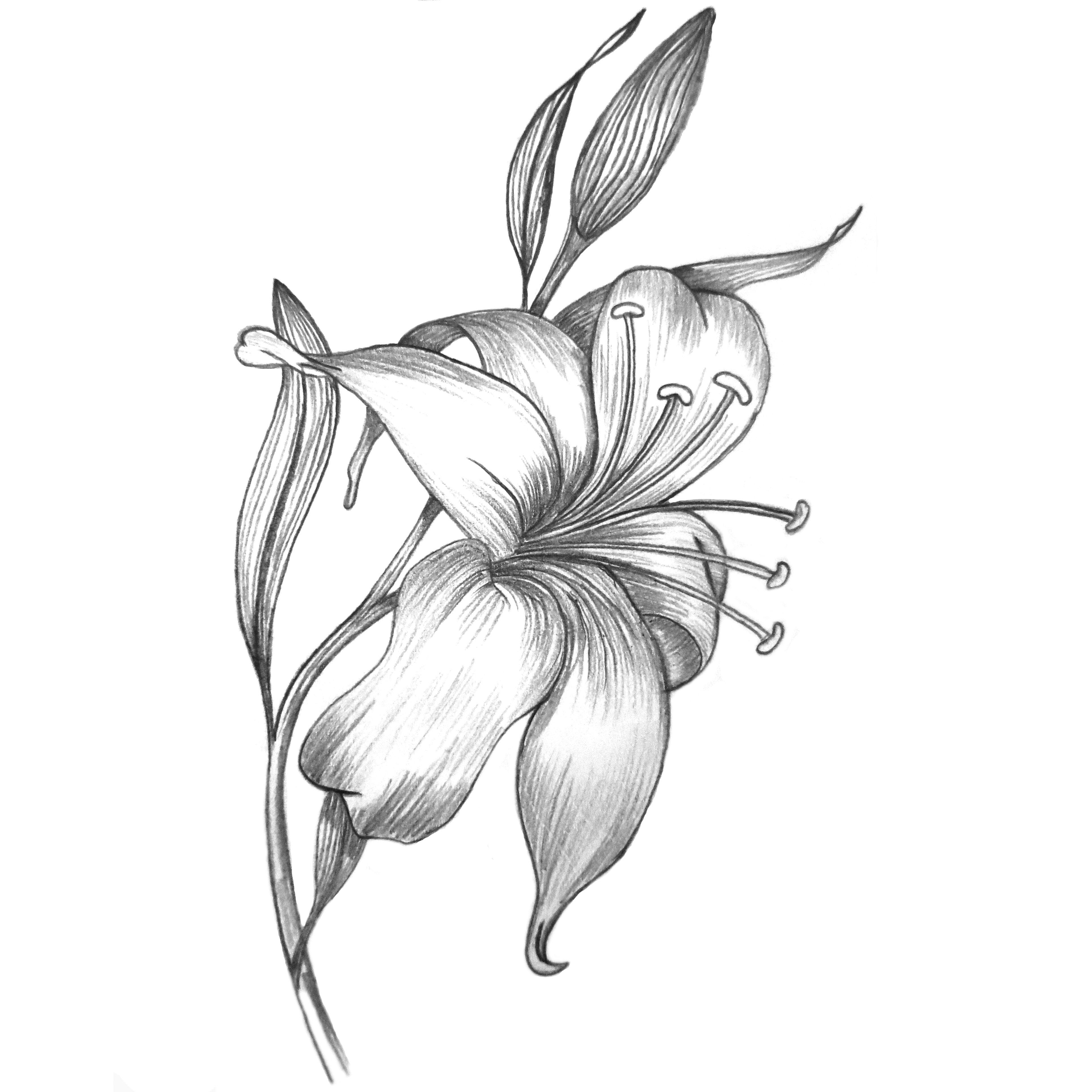 3855x3855 Pencil Sketch