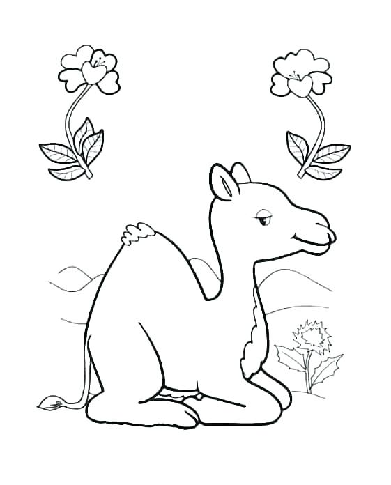 561x696 Camels Coloring Pages Camel Coloring Page For Kids Cartoon Camel