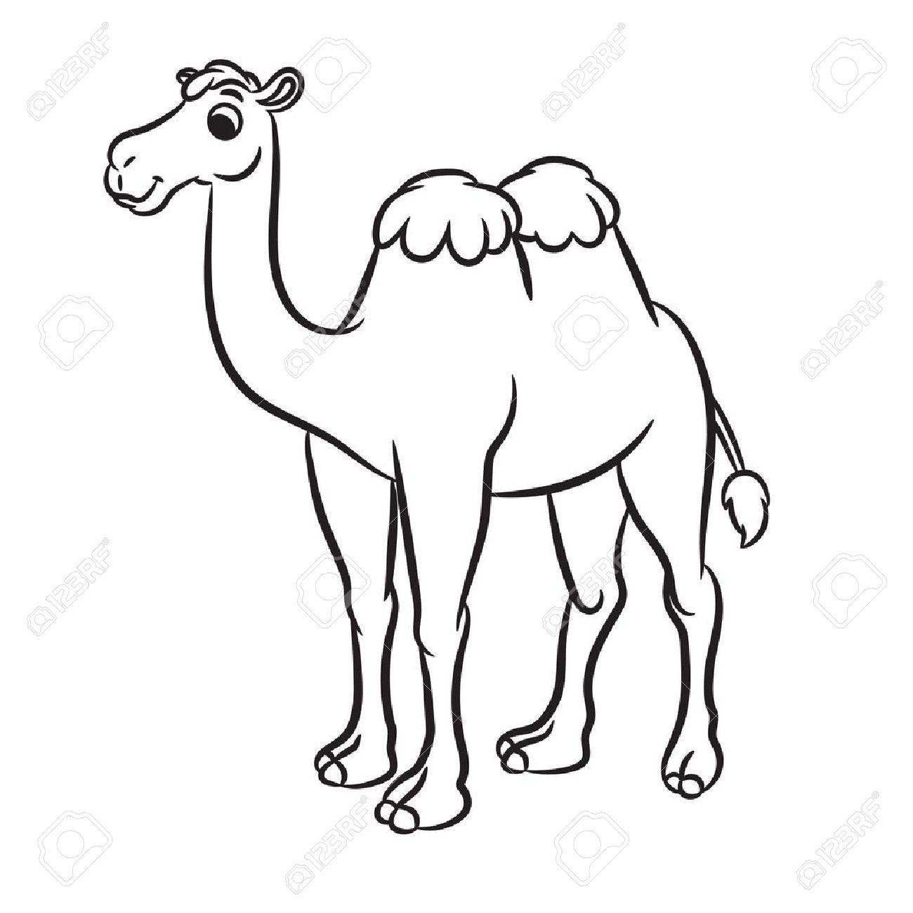 1300x1300 Cartoon Illustration Of Cute Camel Outlined. Vector Illustration