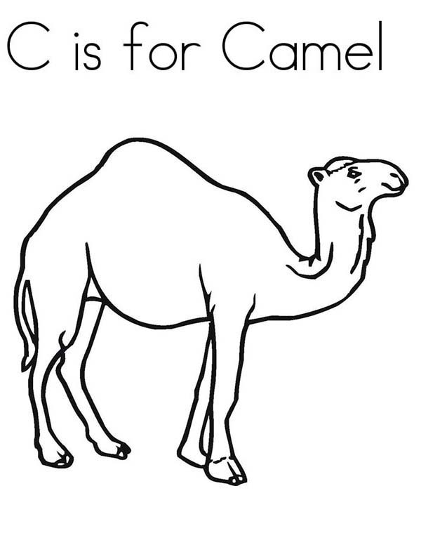 600x776 C Is For Camel Coloring Page Camel Coloring Pages