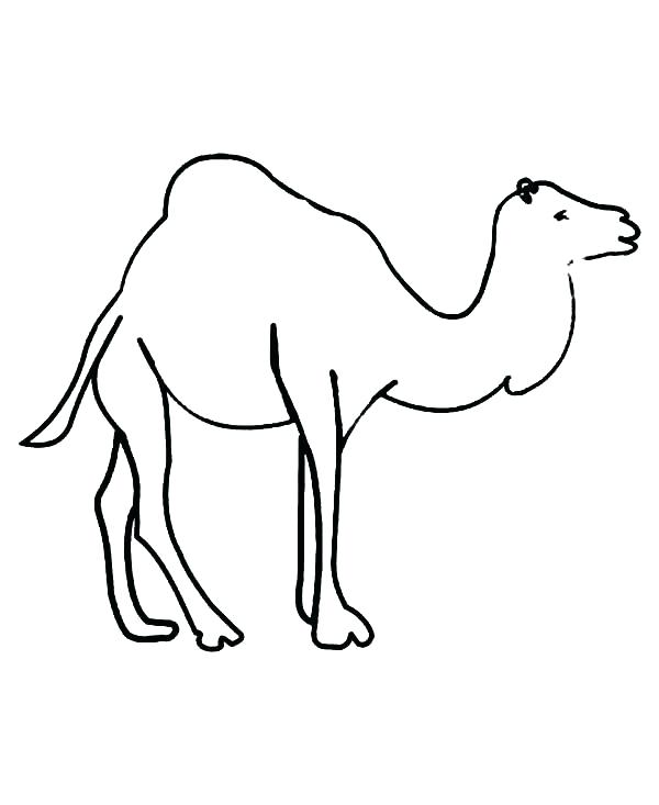 600x733 Camels Coloring Pages C Is For Camel Coloring Page Free Camel