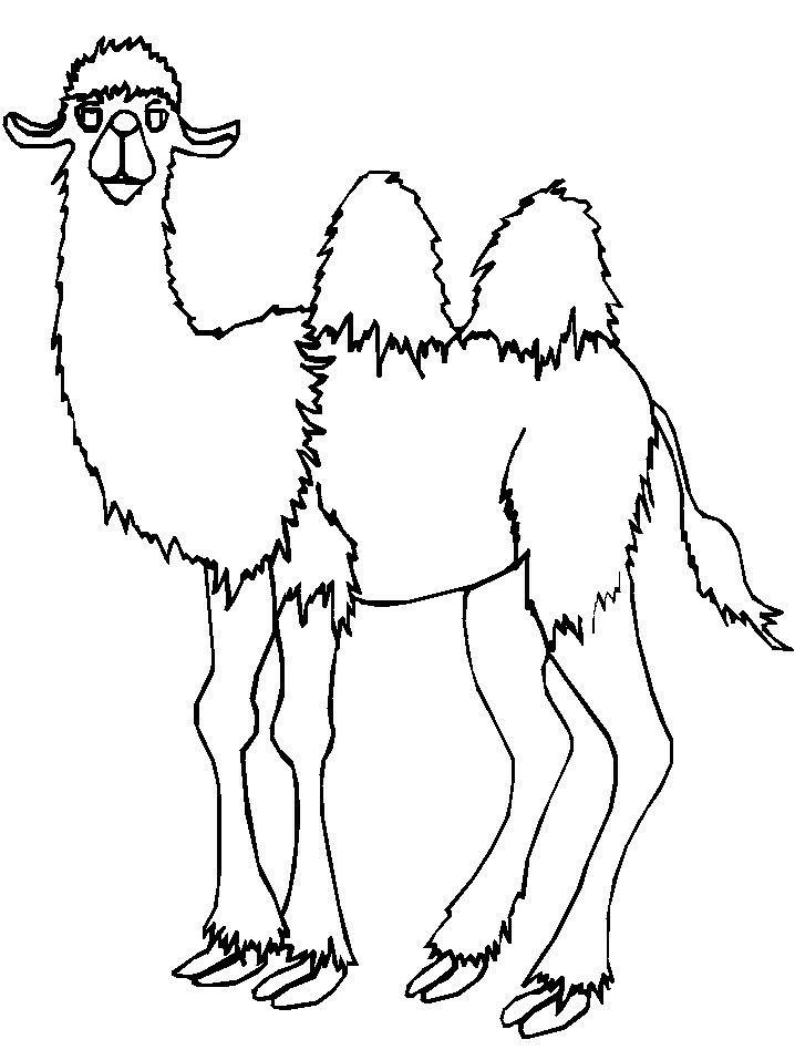 Camel Drawing Images
