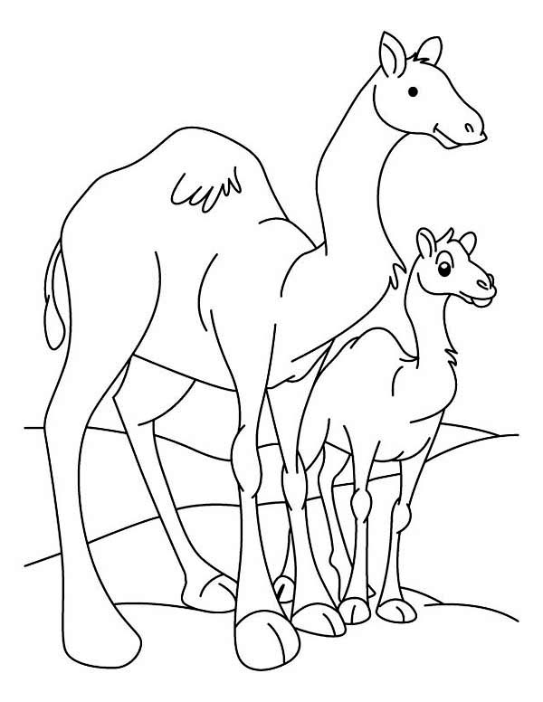 600x776 Camel And Baby Coloring Page