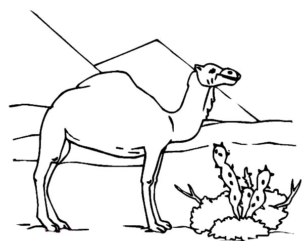 Camel Drawing Images At Getdrawings Com Free For Personal Use
