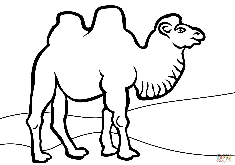 Camel Drawing Images at GetDrawings