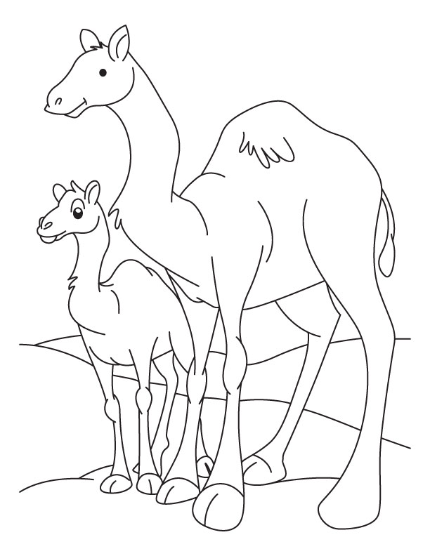 612x792 Drawn Camel Baby Camel