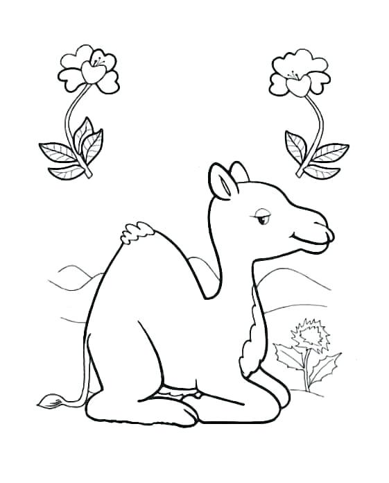 561x696 Best Of Camel Coloring Page Images Bactrian