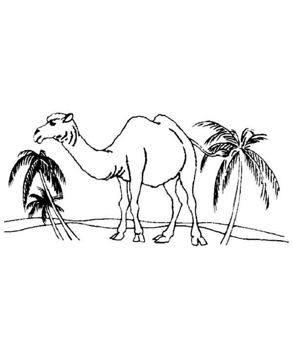 600x734 Man Riding Camel Outline Clipart. Bactrian Camel Outline Bactrian