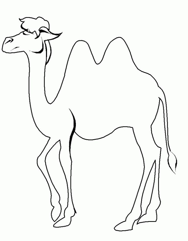 Camel Line Drawing