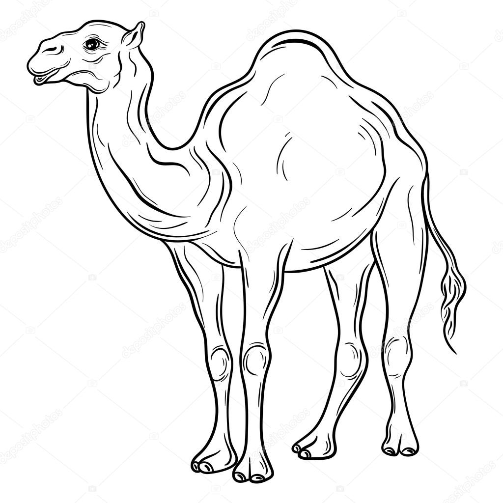 1024x1024 Camel Vector Illustration Stock Vector Vasylieva Yuliya
