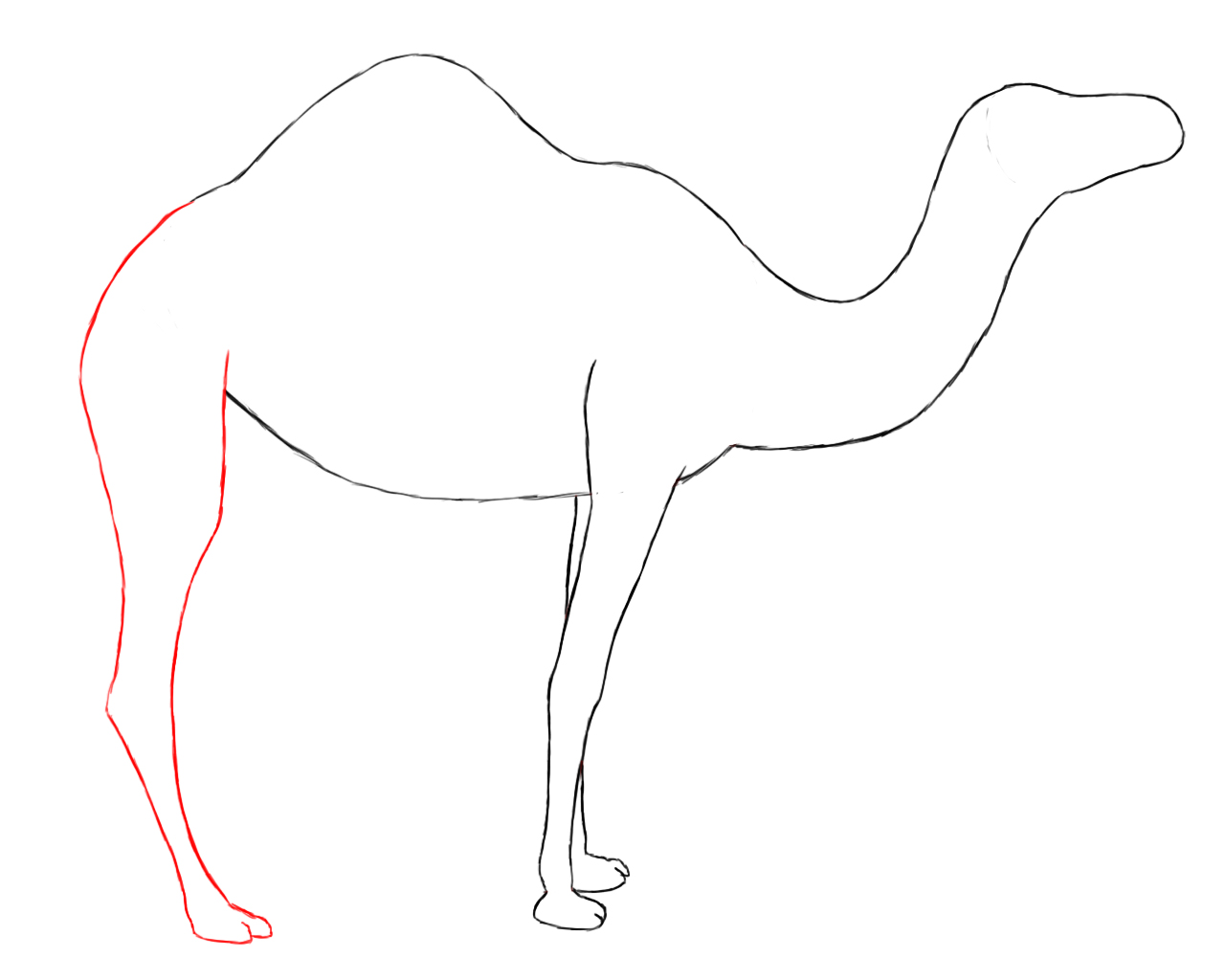 1280x1024 Drawn Camels Line Drawing