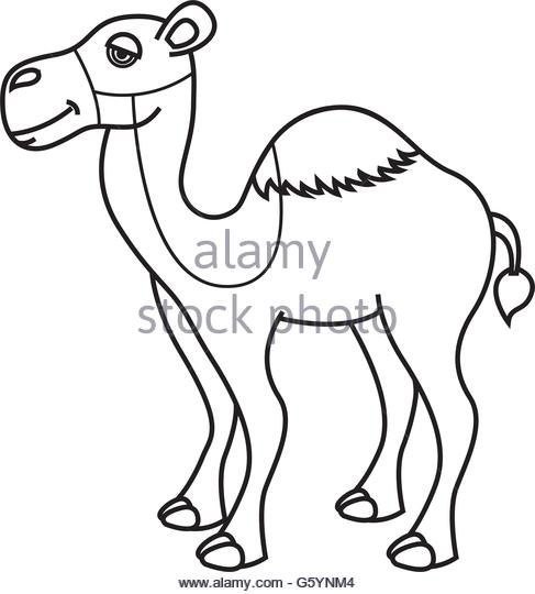 487x540 Arabian Camel Black And White Stock Photos Amp Images