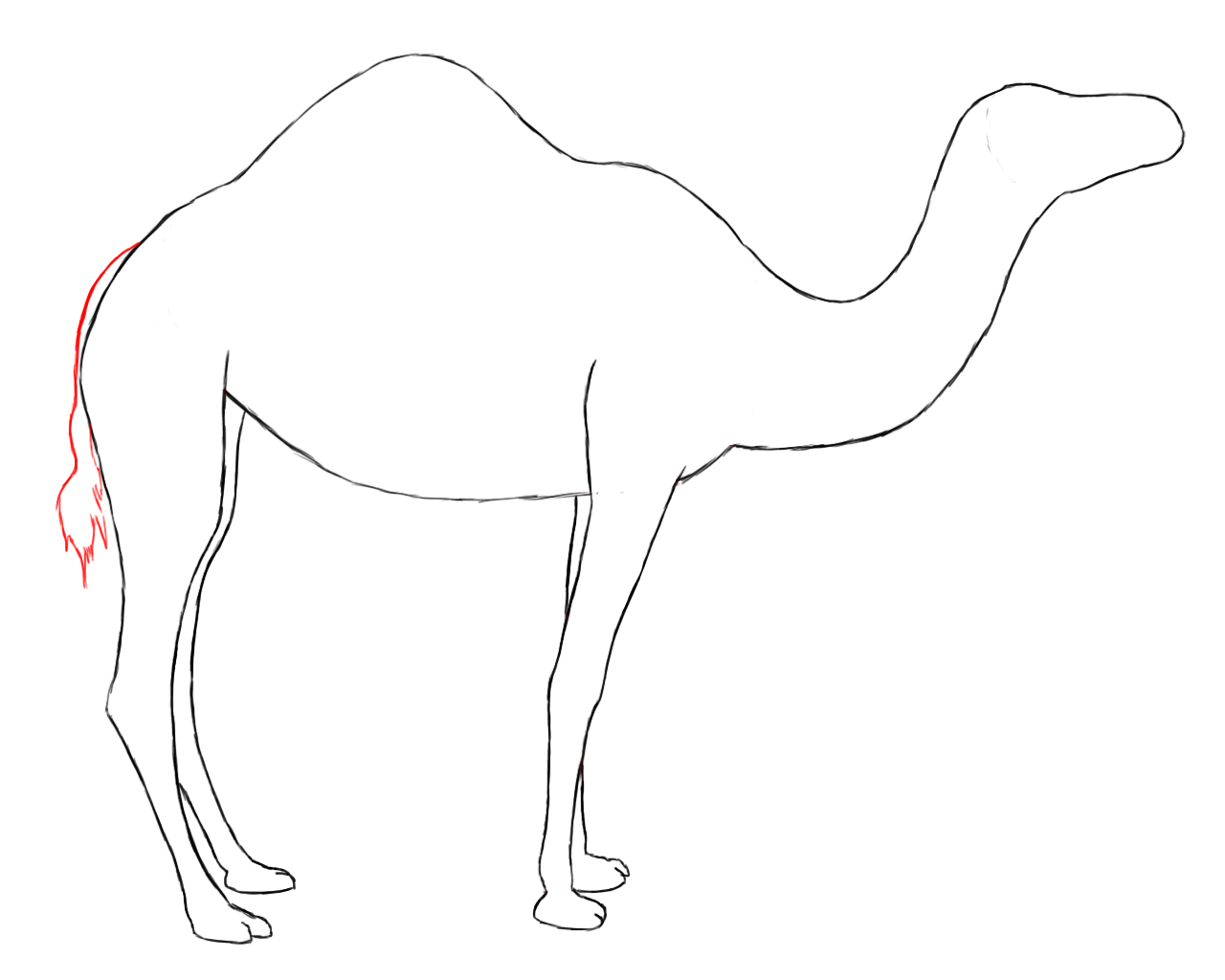 1280x1024 How To Draw A Camel