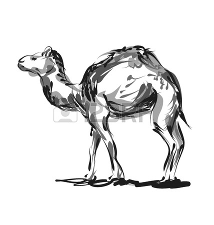 428x450 Vector Line Sketch A Camel Royalty Free Cliparts, Vectors,