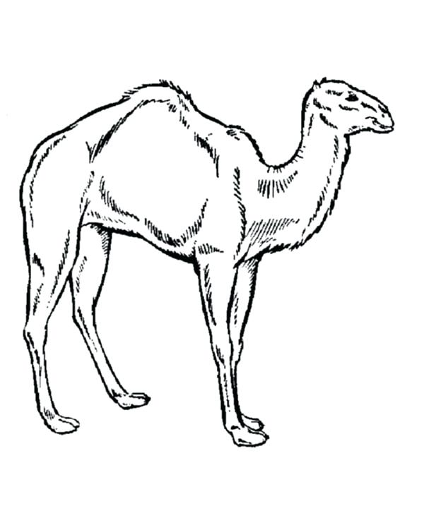 600x734 Camel Coloring Sheet Ideas Camel Colouring Page On Camel Coloring