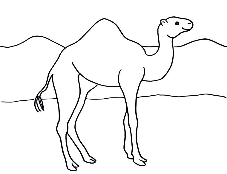 760x584 Camel Coloring Page Camel Coloring Page Free Printable Camel