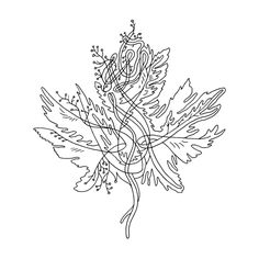 236x236 Canadian Maple Leaf Colouring Page With Abstract Drawing In Mind