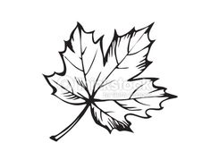 236x188 Maple Leaf Icon Tatoo Icons, Leaves And Tattoo