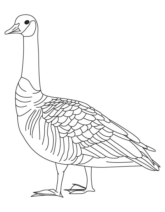 630x810 Goose Coloring Pages