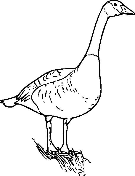 456x594 Canada Goose Clip Art
