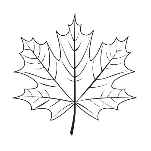 500x500 Maple Leaf Stencil