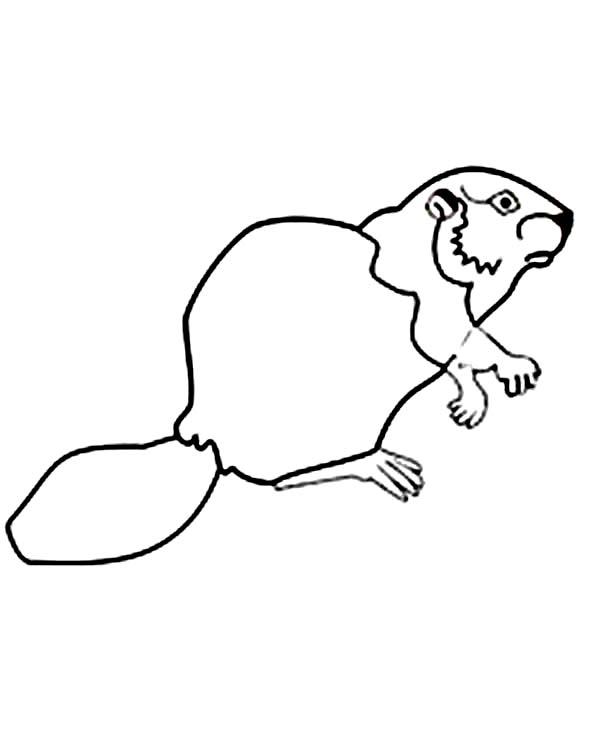 canadian beaver drawing at free for personal use canadian beaver drawing of. Black Bedroom Furniture Sets. Home Design Ideas