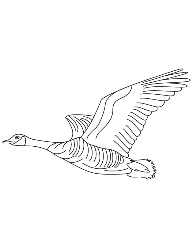630x810 Domestic Goose Flying Coloring Page Download Free