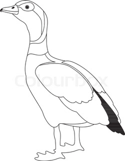 250x320 Vector Drawing Of White Goose Stock Vector Colourbox