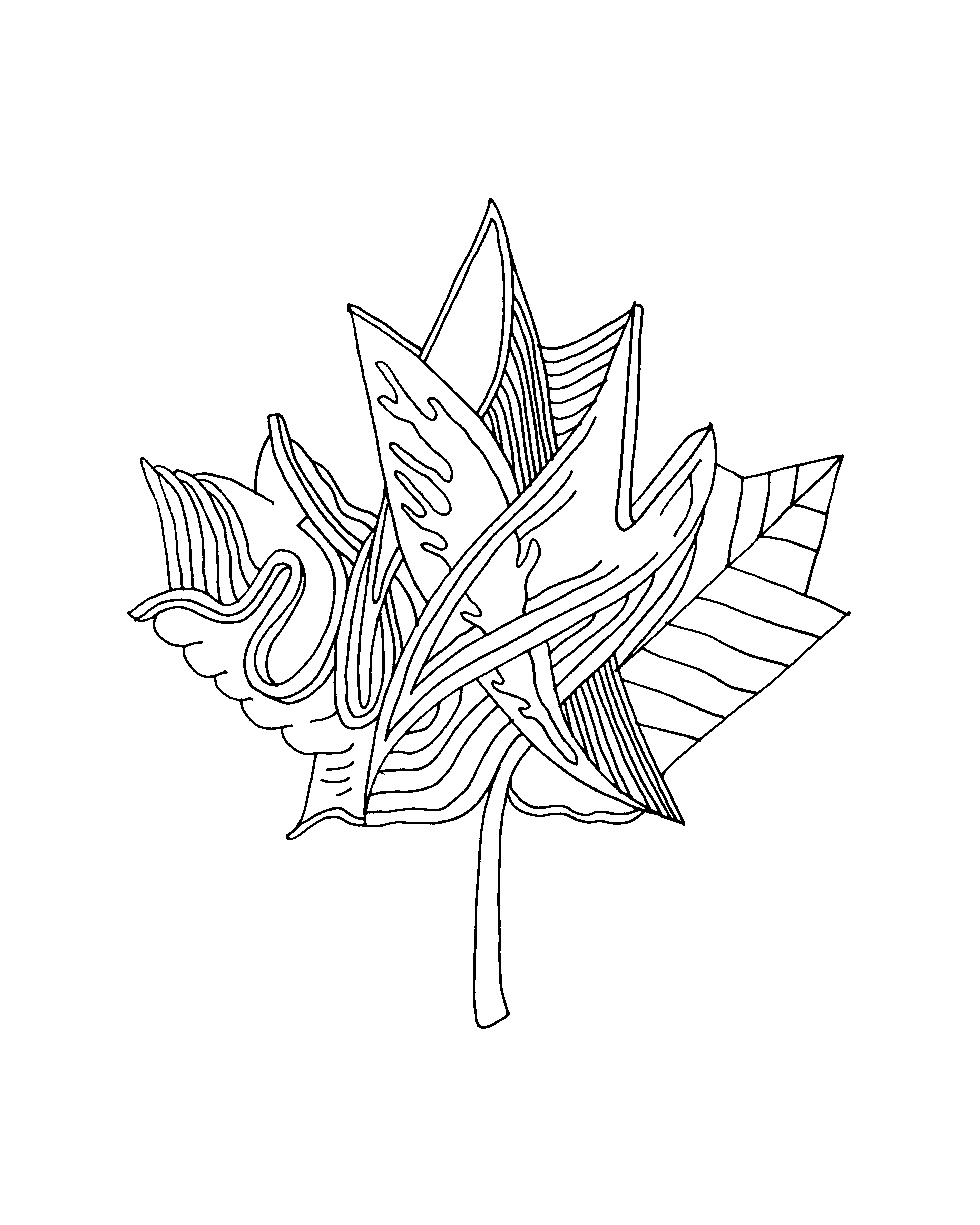 4800x6000 10,000 Pages Canadian Maple Leaf Colouring Page 5880