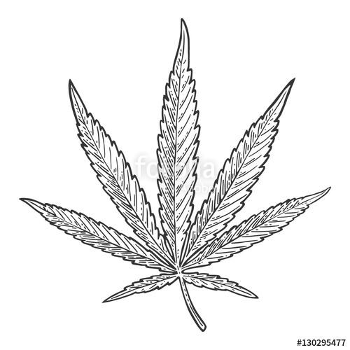 500x500 Marijuana Leaf. Vintage Black Vector Engraving Illustration Stock