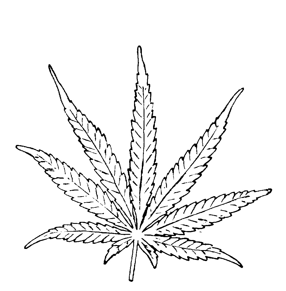 992x1010 Drawing Of Pot Leaf How To Draw A Pot Leaf Step 2