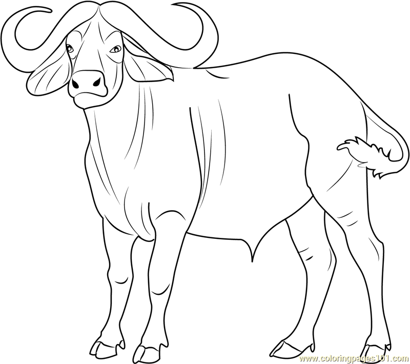 800x710 Cape Buffalo Coloring Pages Coloring Page For Kids