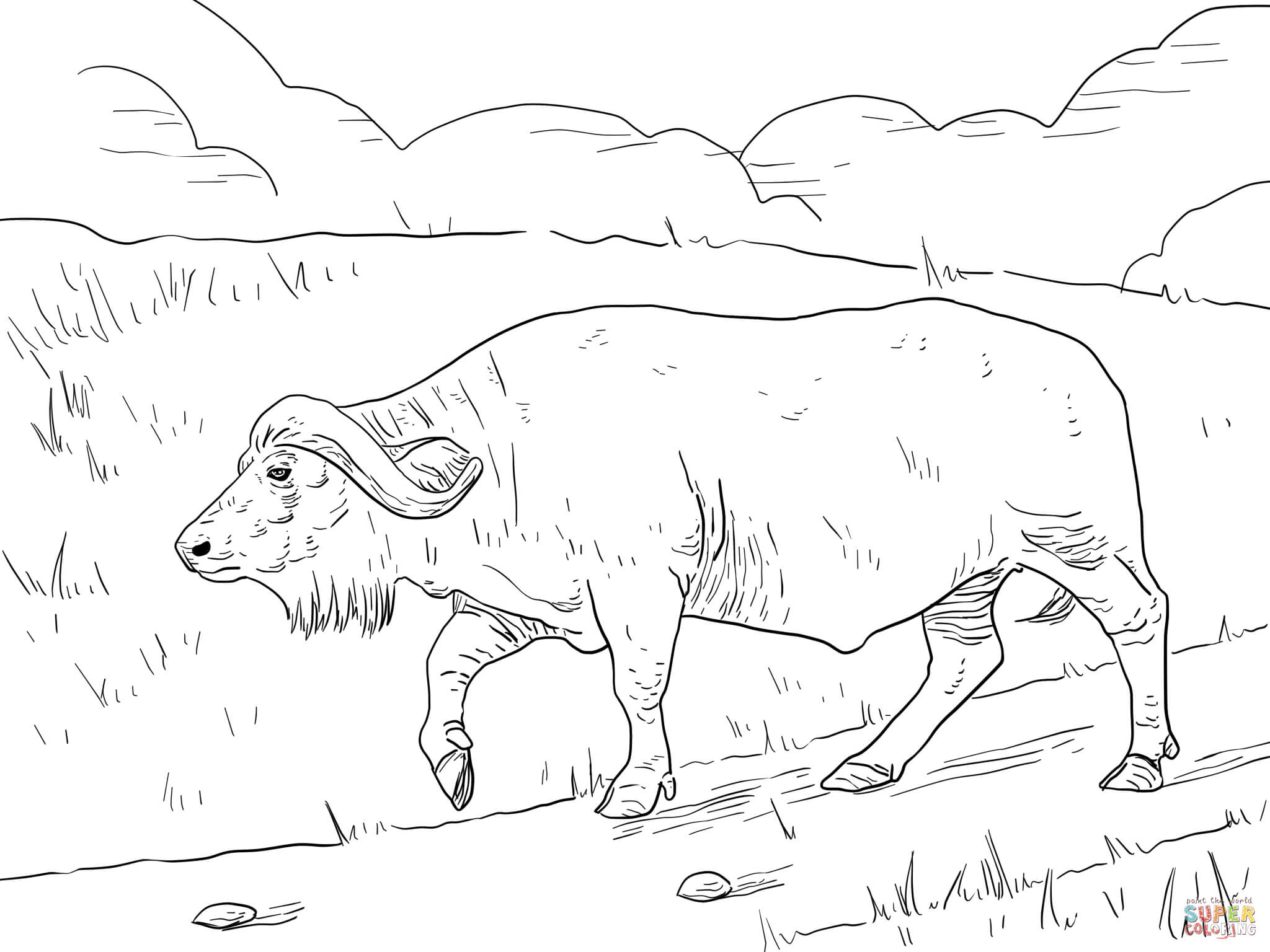 2048x1536 Cape Buffalo Coloring Page Free Printable Coloring Pages