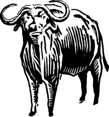 219x235 Cape Water Buffalo Tattoo